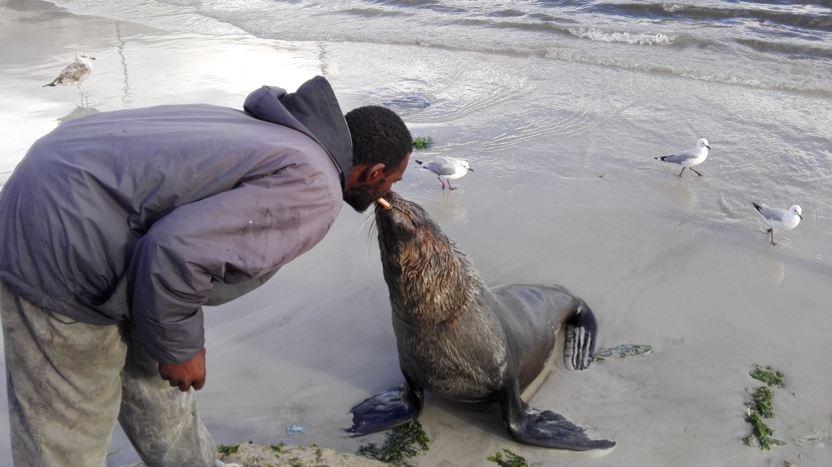 seal-kiss