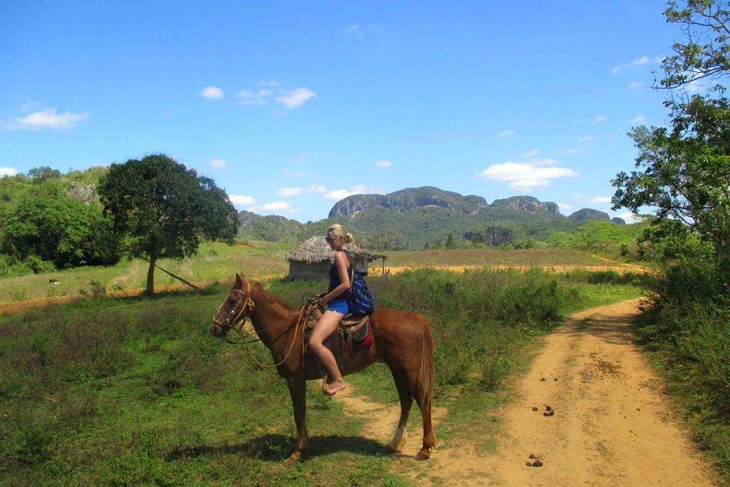 caballo-vinyales