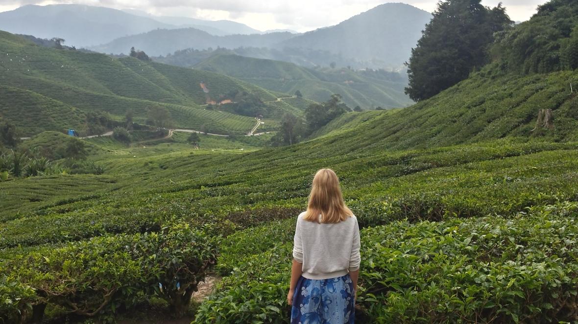 TeaPlantation
