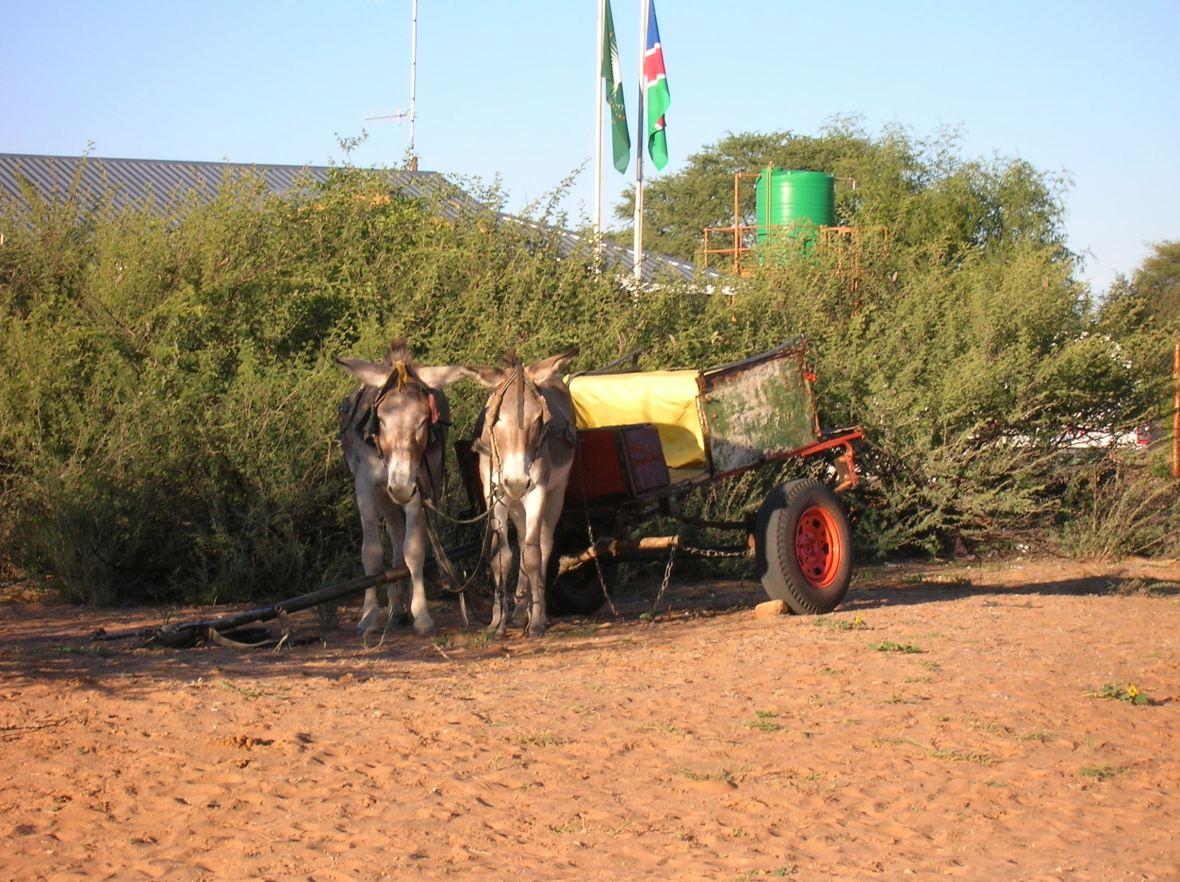 Namibian donkey cart
