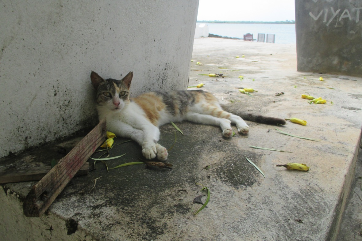 Kitty Cat on Lamu Island