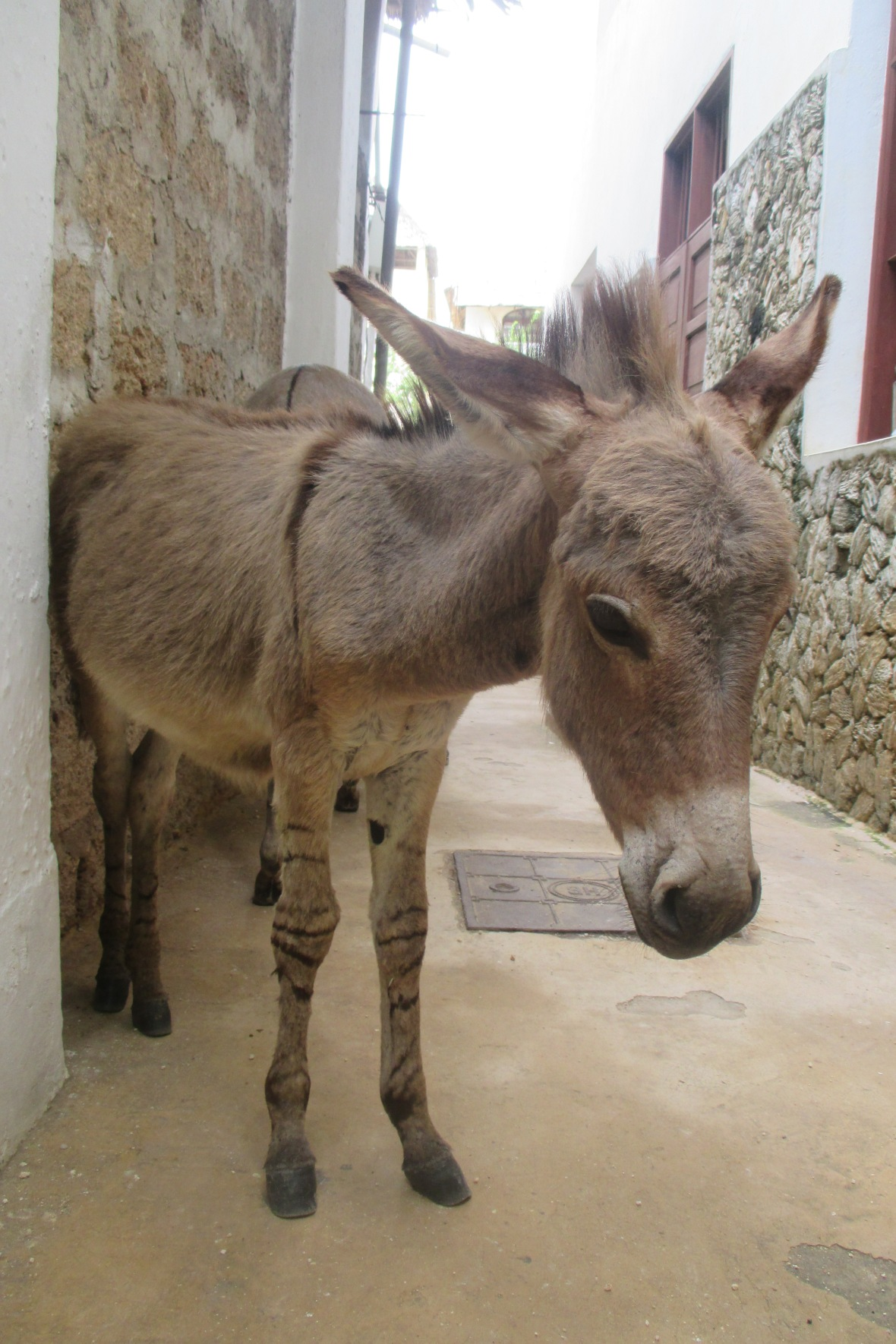 Bae Donkey