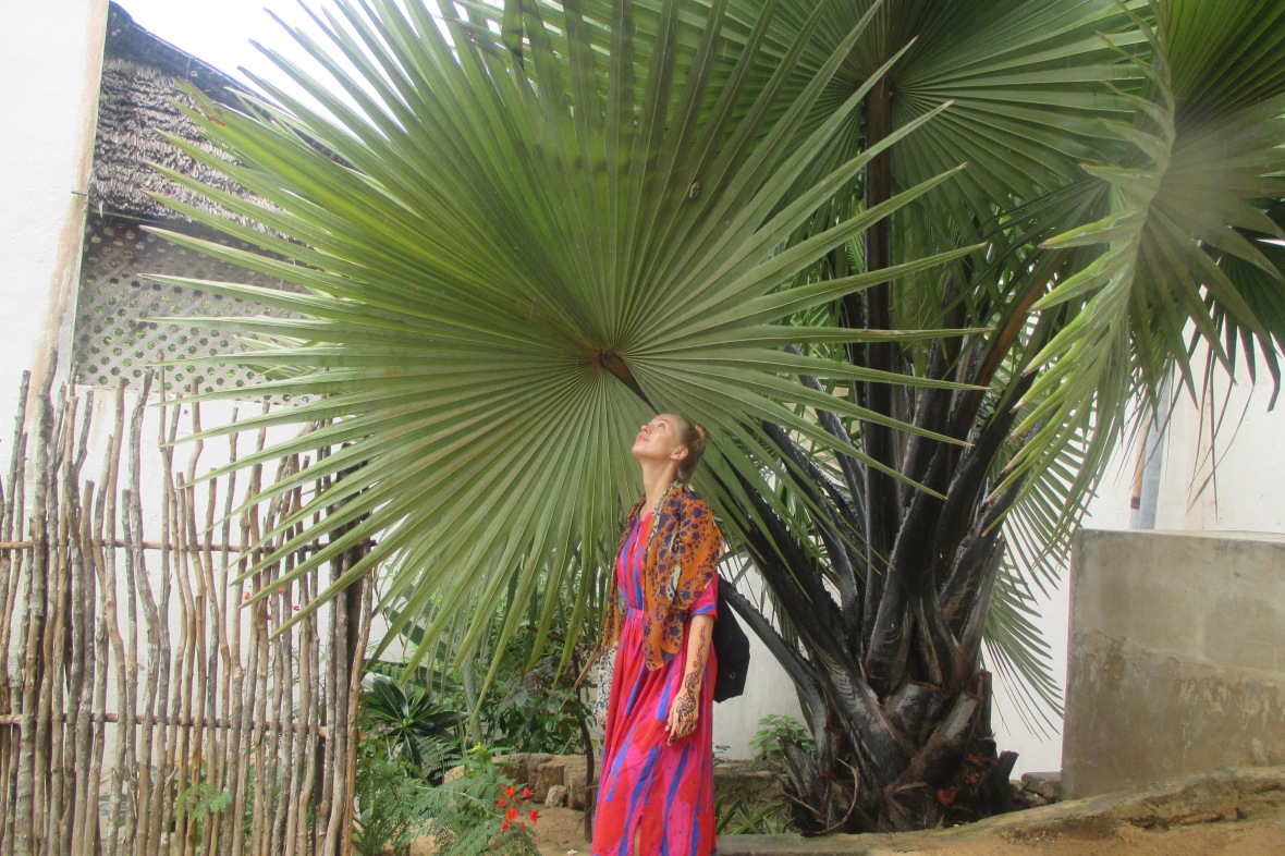 Shela Palm Tree