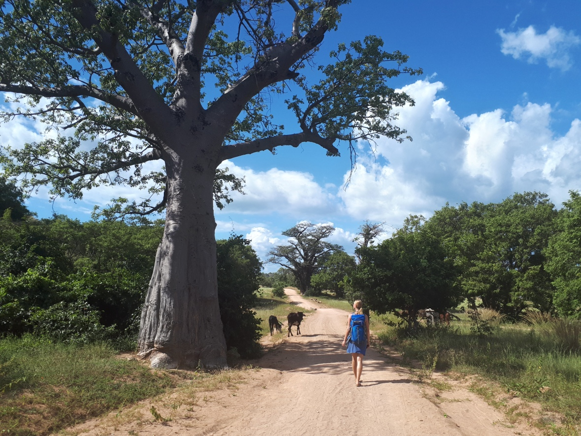 Likoma Baobab Avenue